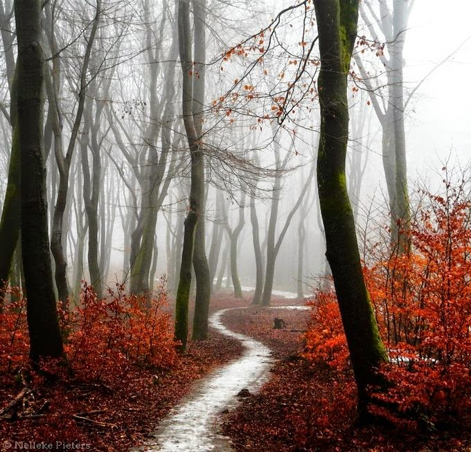 Nelleke Pieters Photography 1