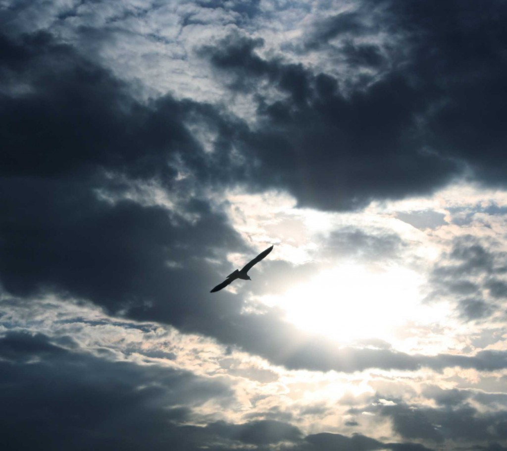 bird_flying_with_dark_clouds_background_1800x1600